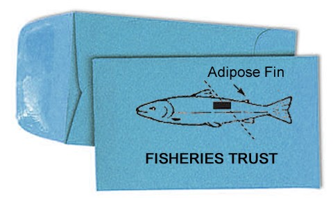 Custom Fish Scale Packets / Envelopes